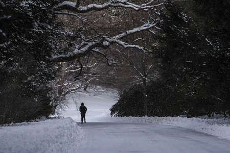 Alone in Winter, Arnold Arboretum, Boston, MA